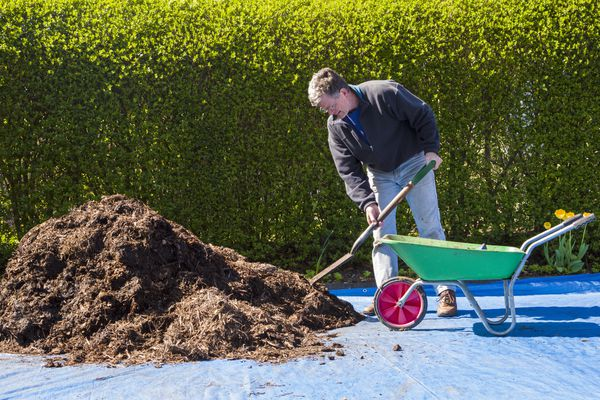 Man shoveling mulch into wheelbarrow.