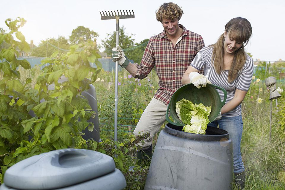 Couple working in allotment depositing waste into recycling compost bin.