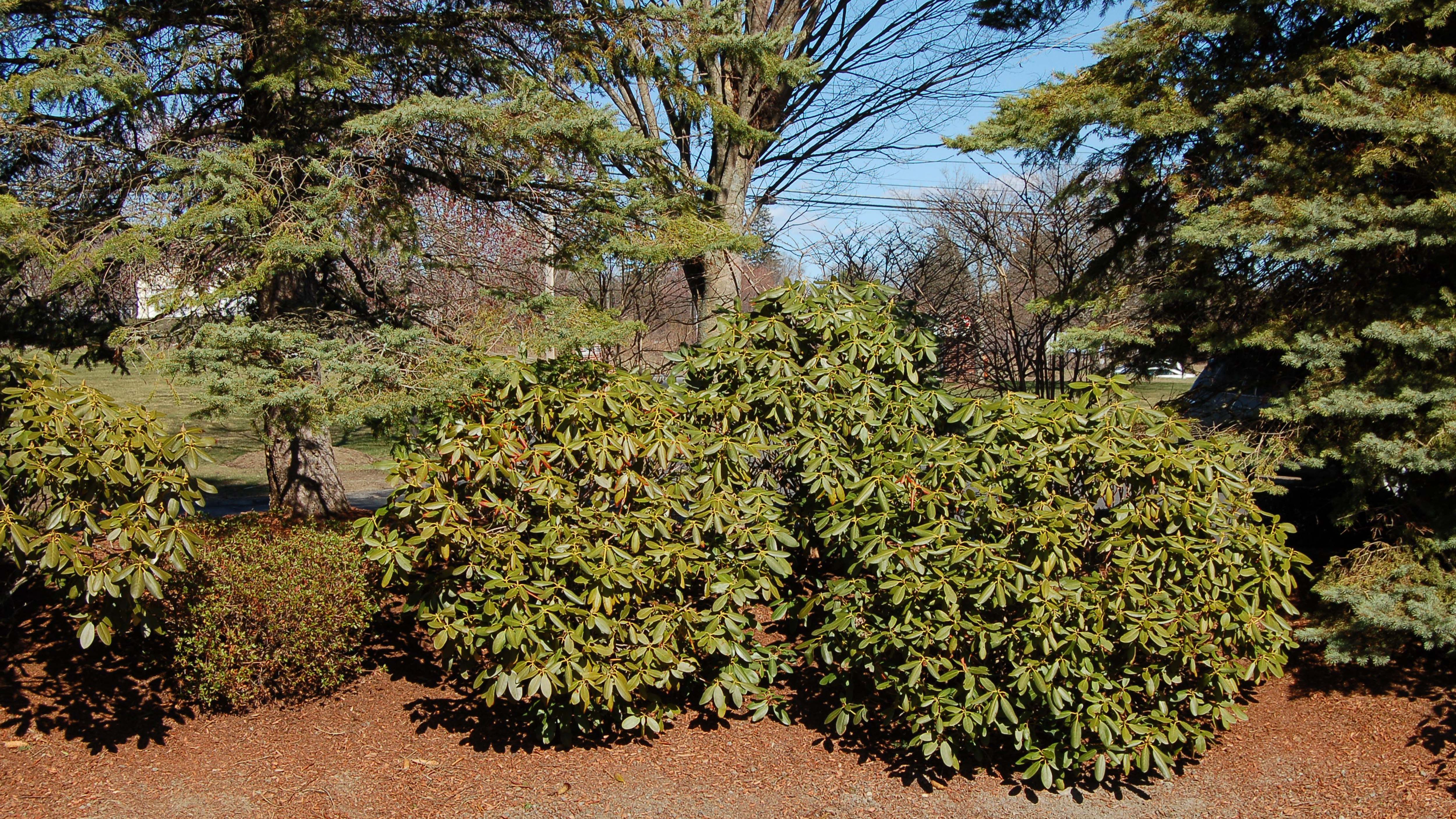 How to Build and Use Berms in Your Yard's Landscape