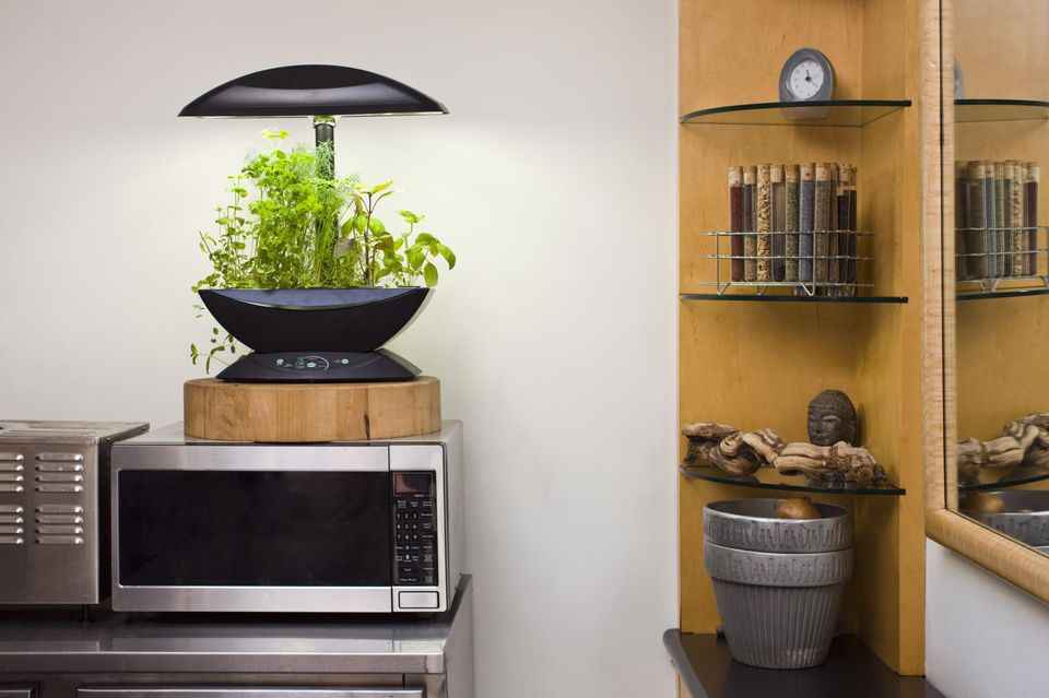 Herb garden in a New York City apartment kitchen
