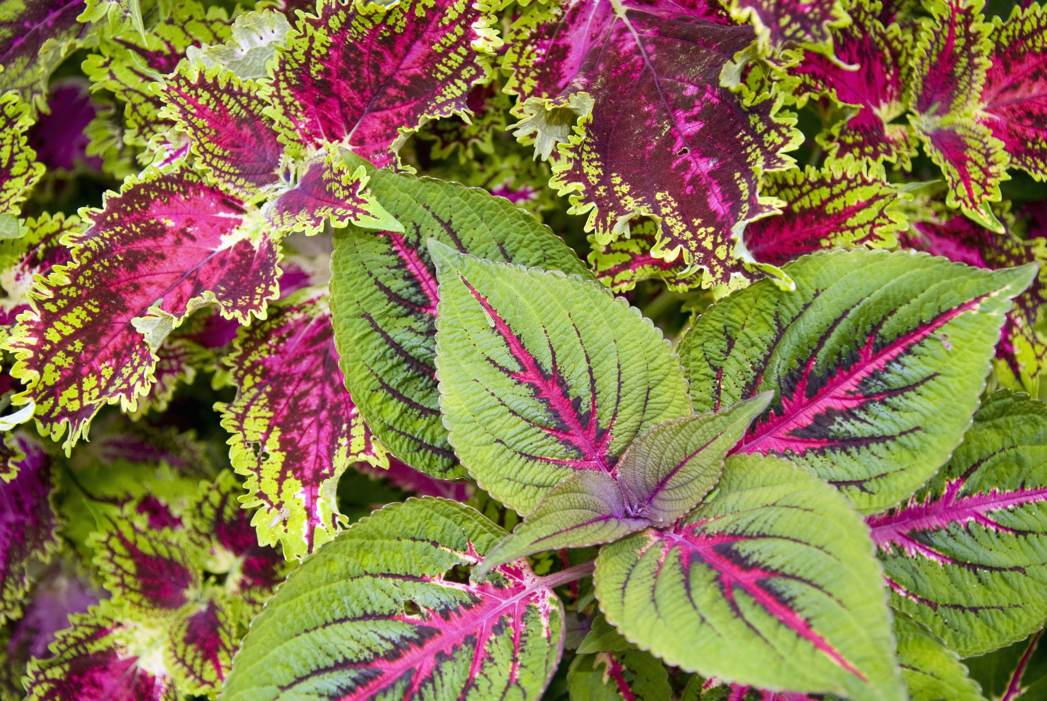 18 Best Types Of Foliage Plants