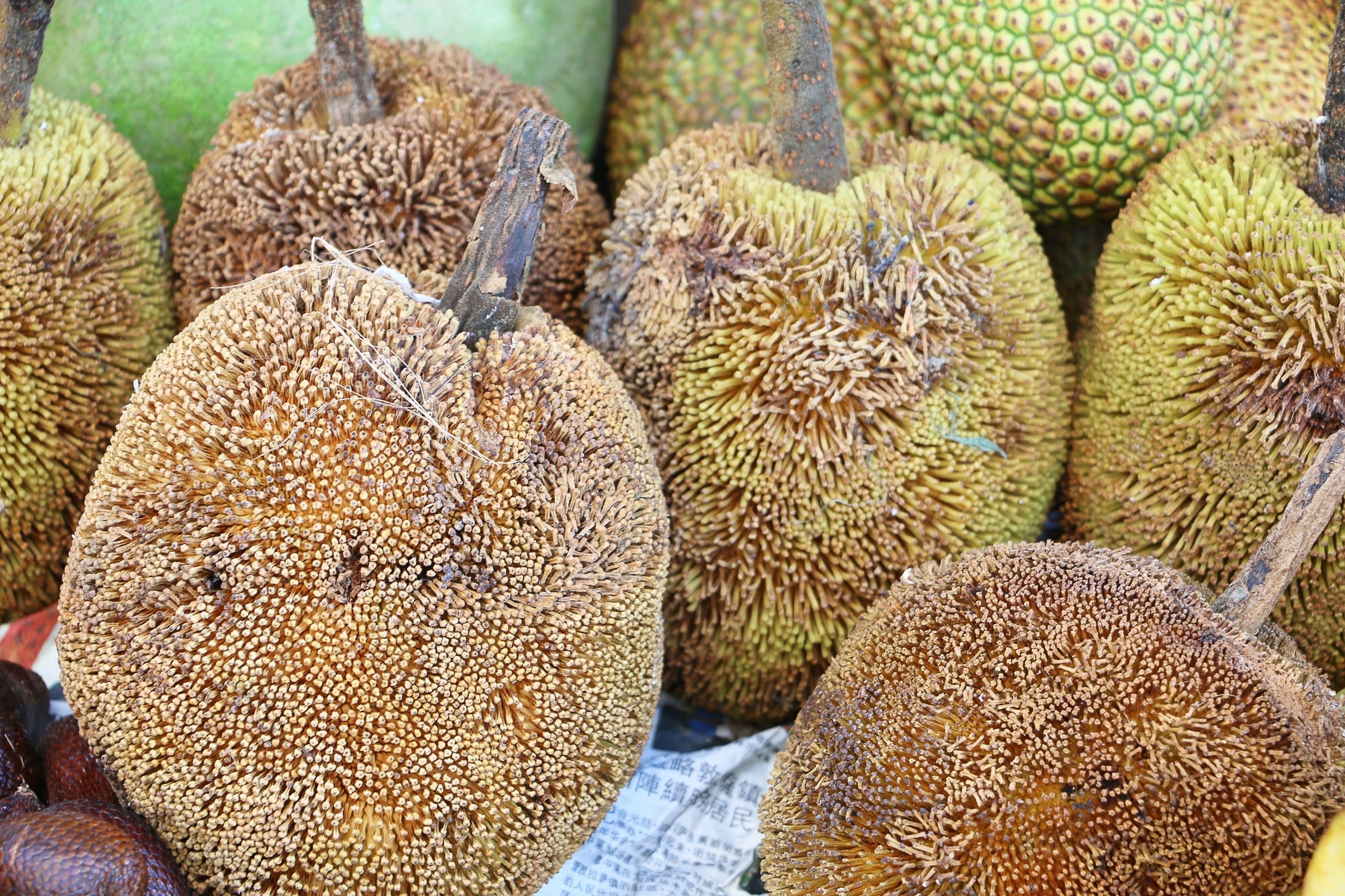 Buah Tarap or Artocarpus odoratissimus