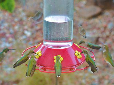 Where to Hang Hummingbirds Feeders