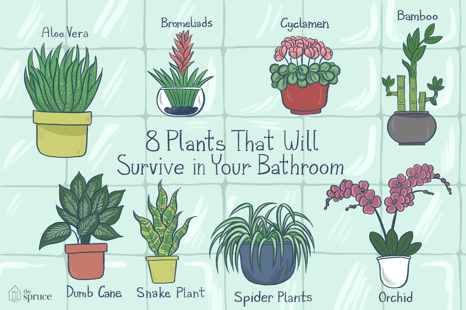 19 Best Houseplants For Your Bathroom