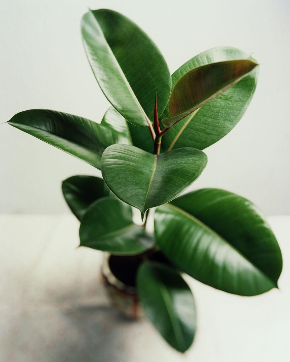 10 air purifying plants for feng shui. Black Bedroom Furniture Sets. Home Design Ideas