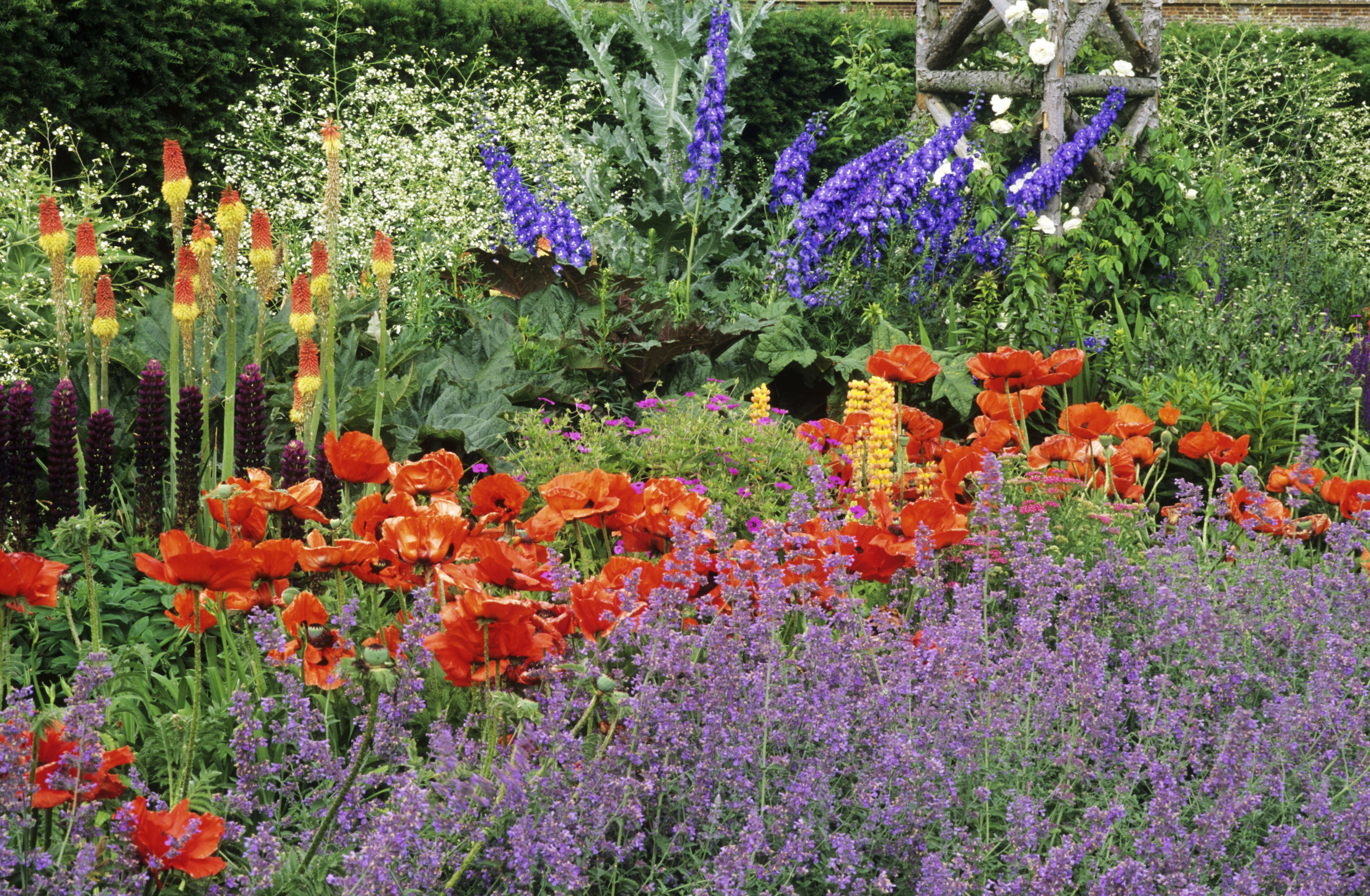 Flores rojas y púrpuras