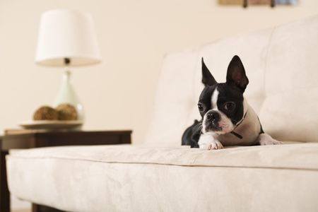 Couch Upholstery Choices for Cat and Dog Owners