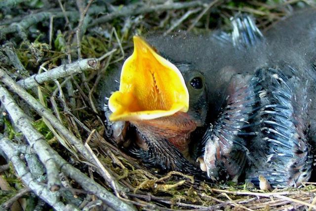 Pájaro bebé