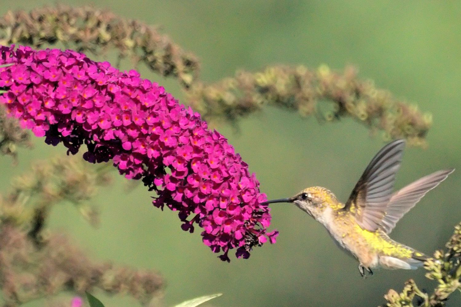 Top 10 Flowers That Attract Hummingbirds