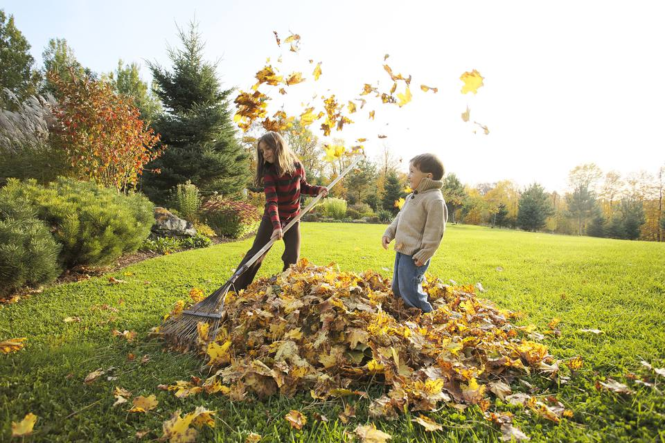 Kids raking leaves on the lawn