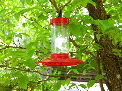 First Nature Hummingbird Feeder
