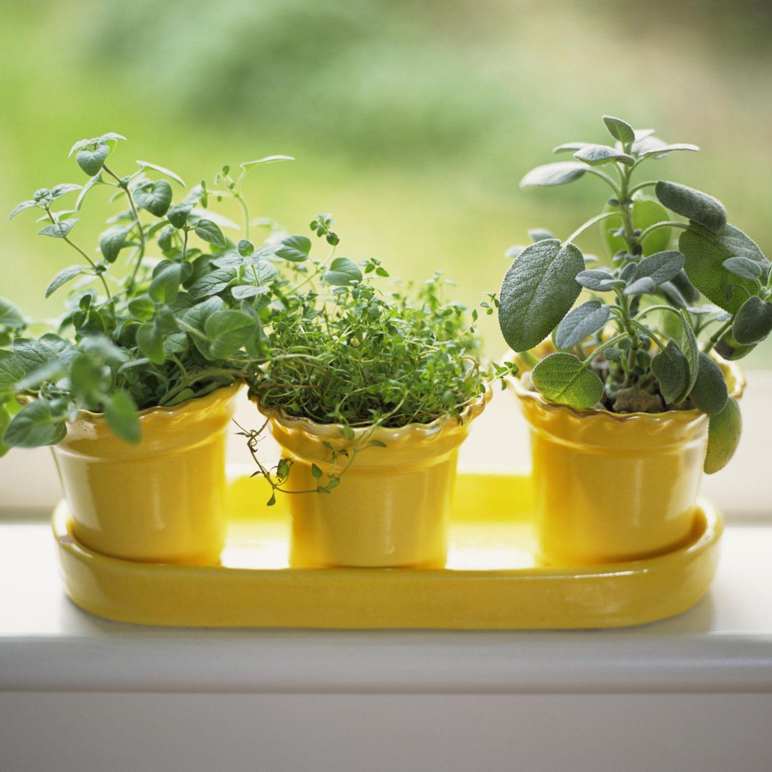 Grow Herbs Indoors On A Sunny Windowsill