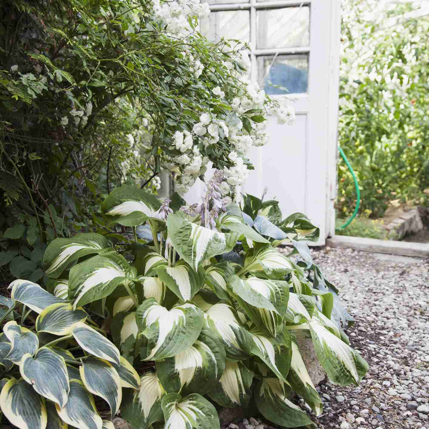 Great Foliage Plants for Container Gardens