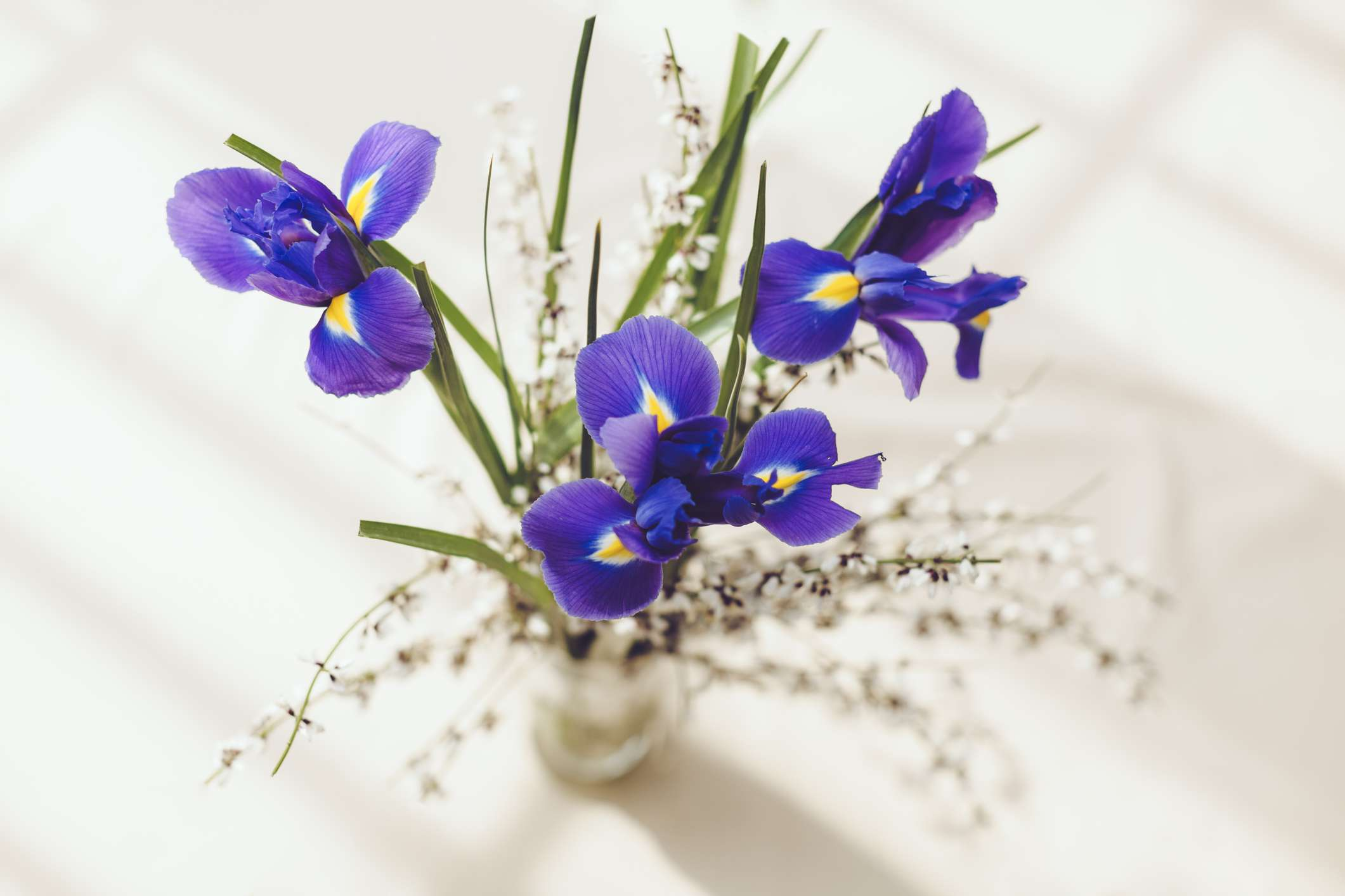 Irises in a vase on a table