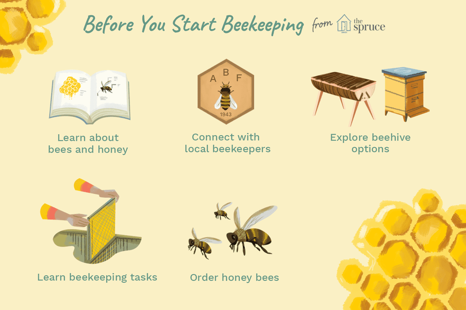 before you start beekeeping illustration