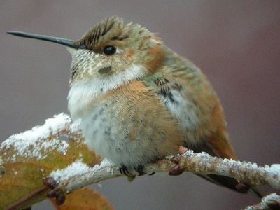 Is It Time To Take Down Hummingbird Feeders