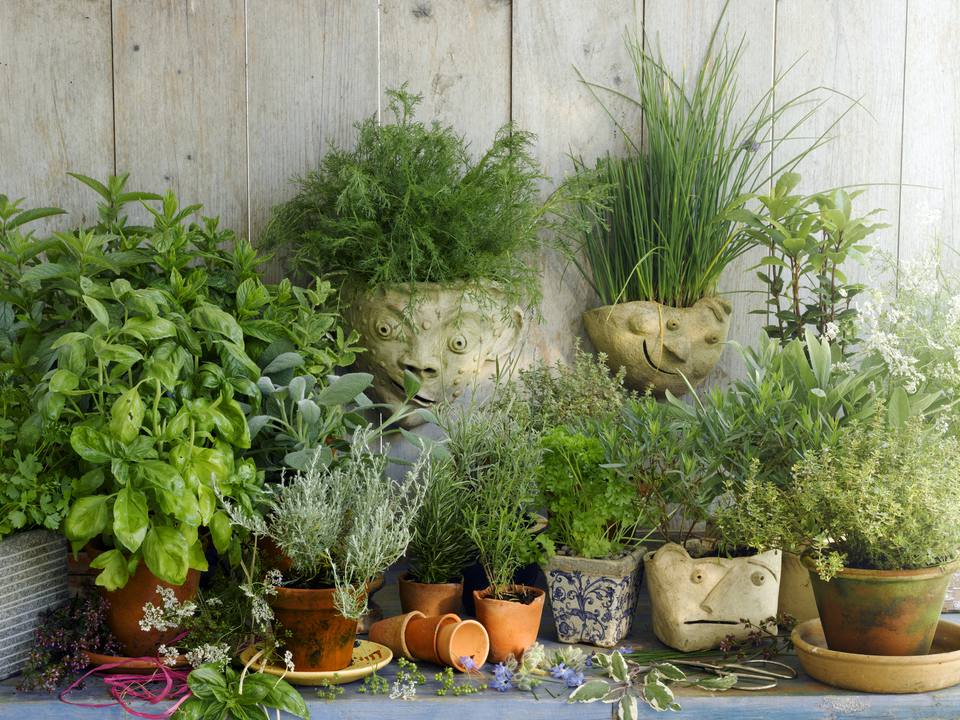 Planning a Garden for Growing Herbs – Planning A Herb Garden