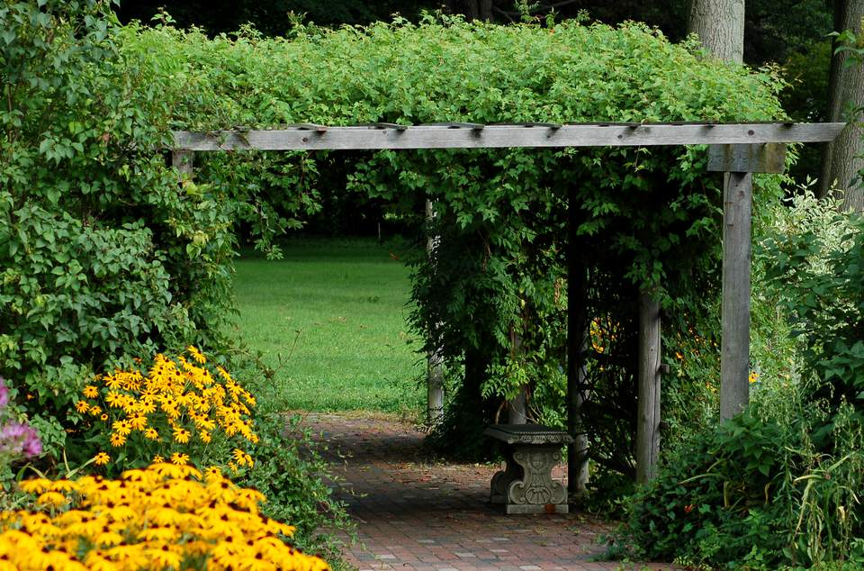 Vine-covered pergola.