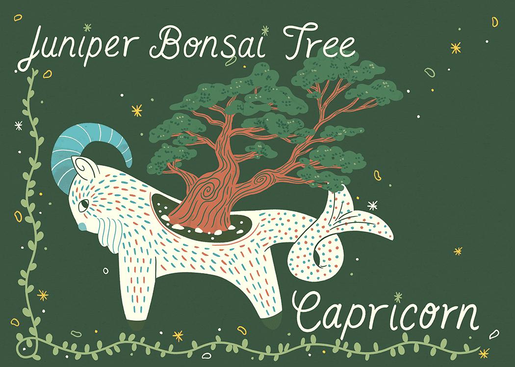 juniper bonsai tree illustration