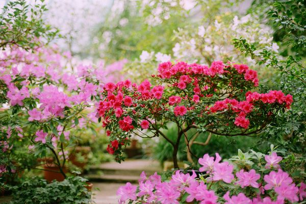 pink and red blooms in a garden