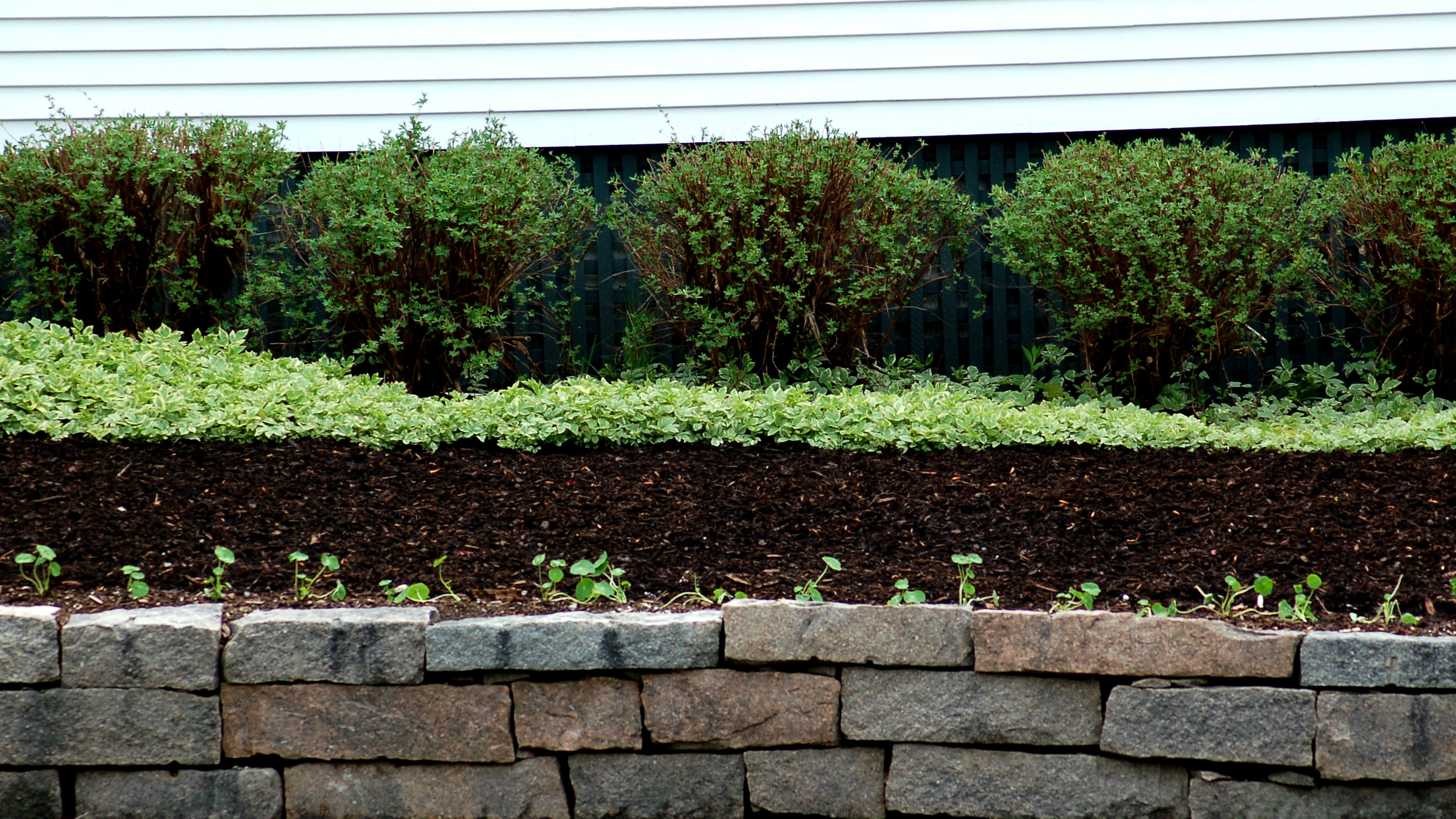 Is Dyed Mulch Safe To Use Here S One Type Ok To Handle