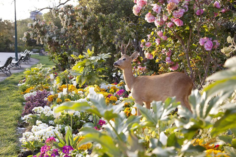 Deer standing in a garden
