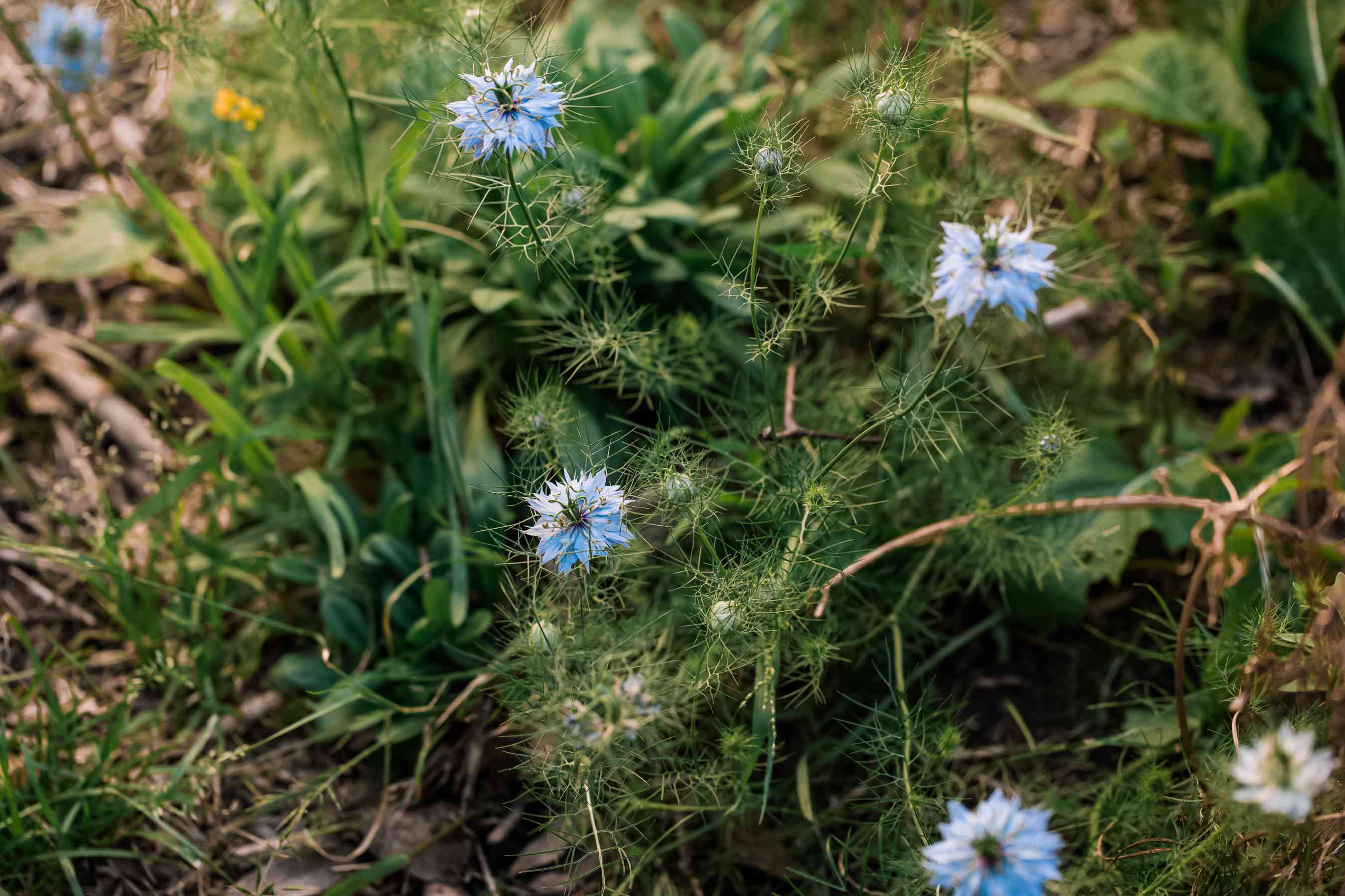 young love in a mist patch