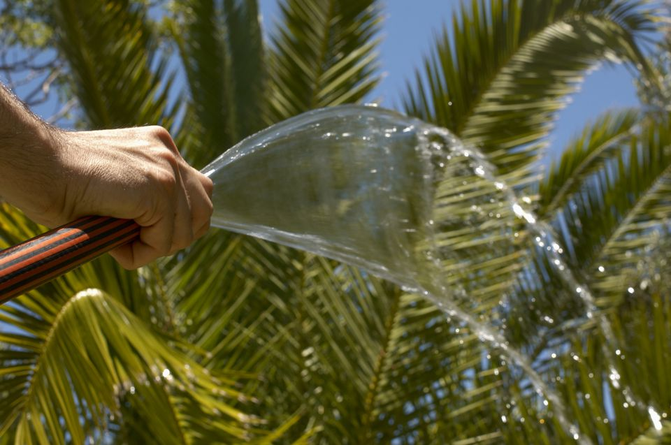 11 Fascinating Facts About Palm Trees