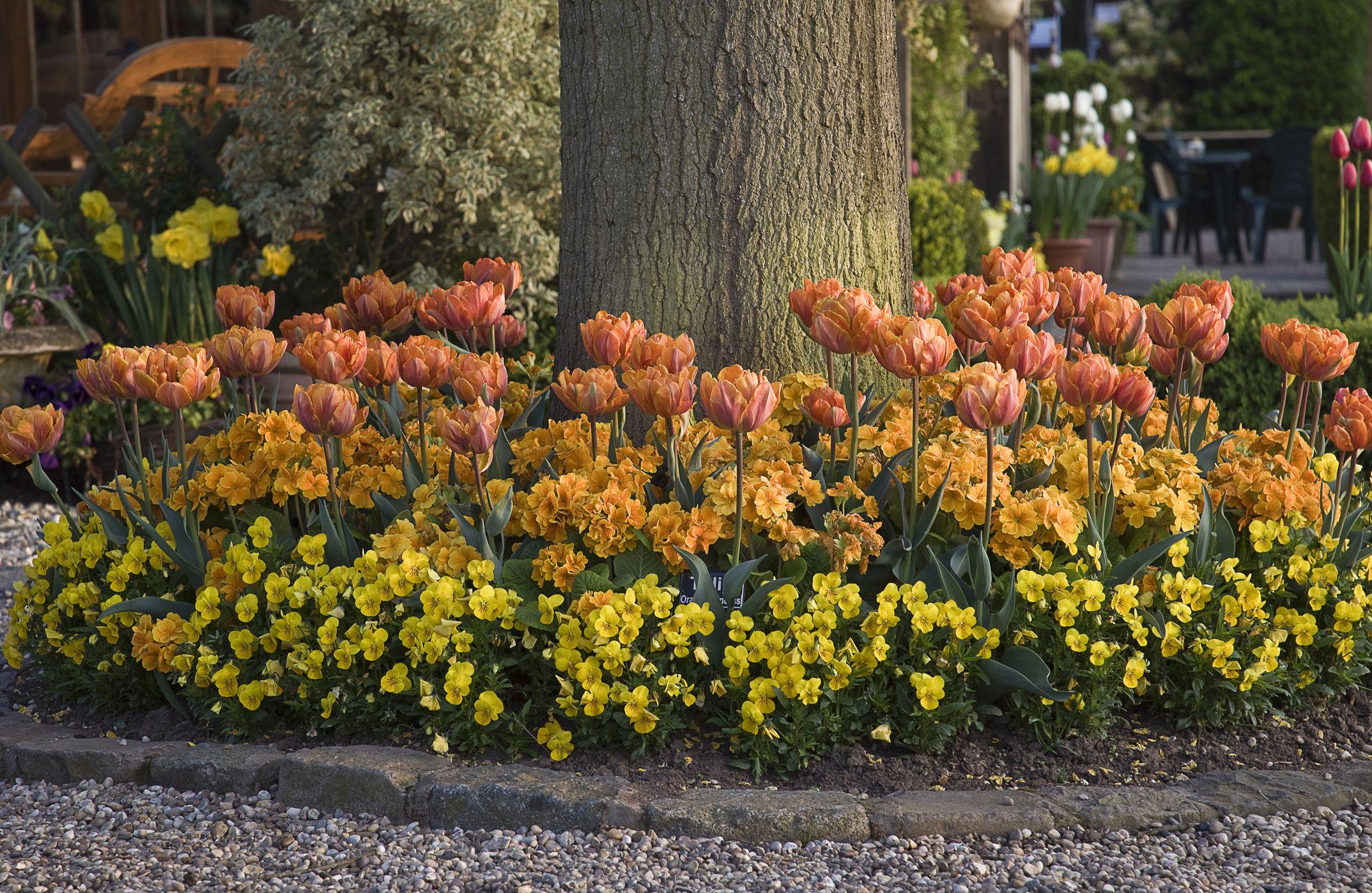 Plant a Flower Garden Under a Tree