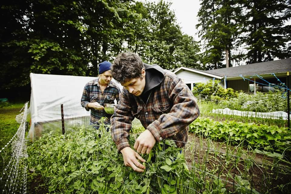 Horticultural Plants