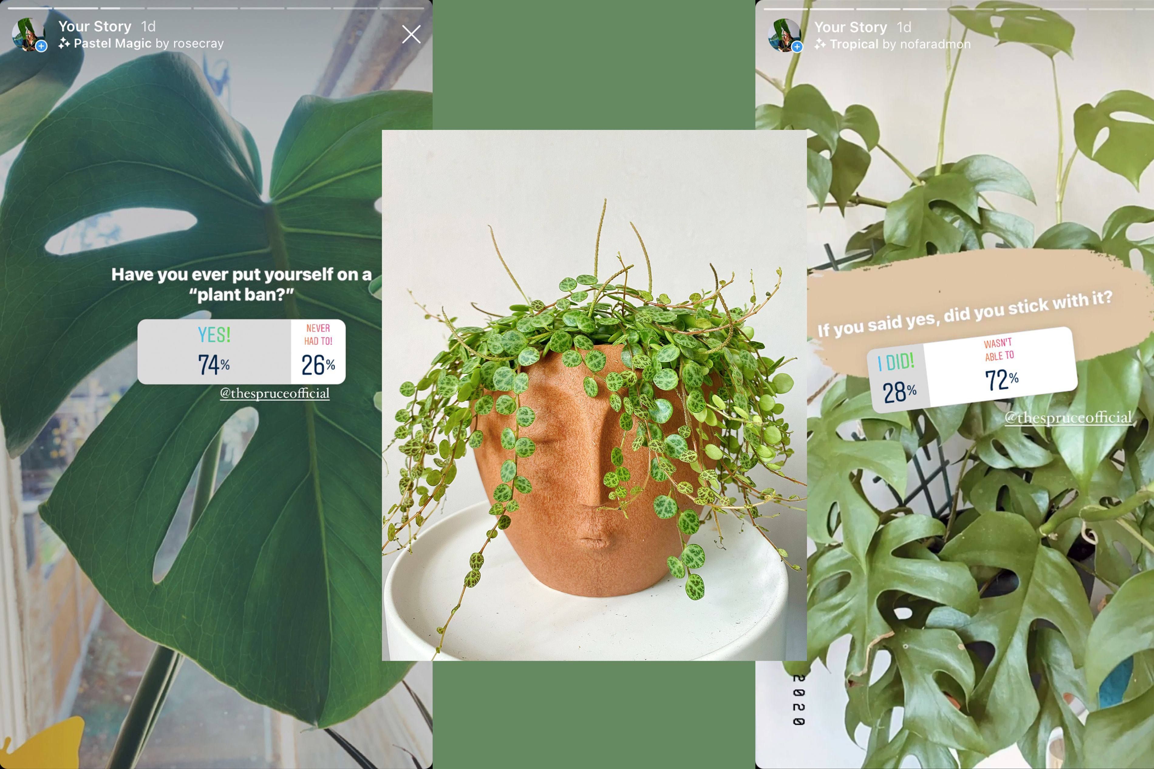We've Got the Dirt on Why You Can't Stop Buying Plants