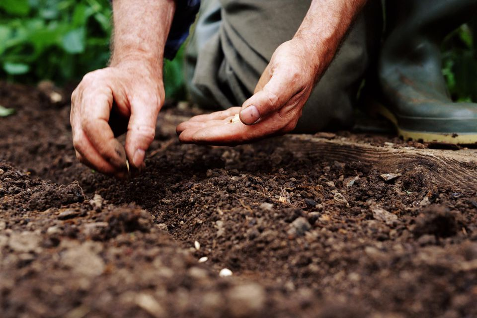 Mature man planting seeds, close-up