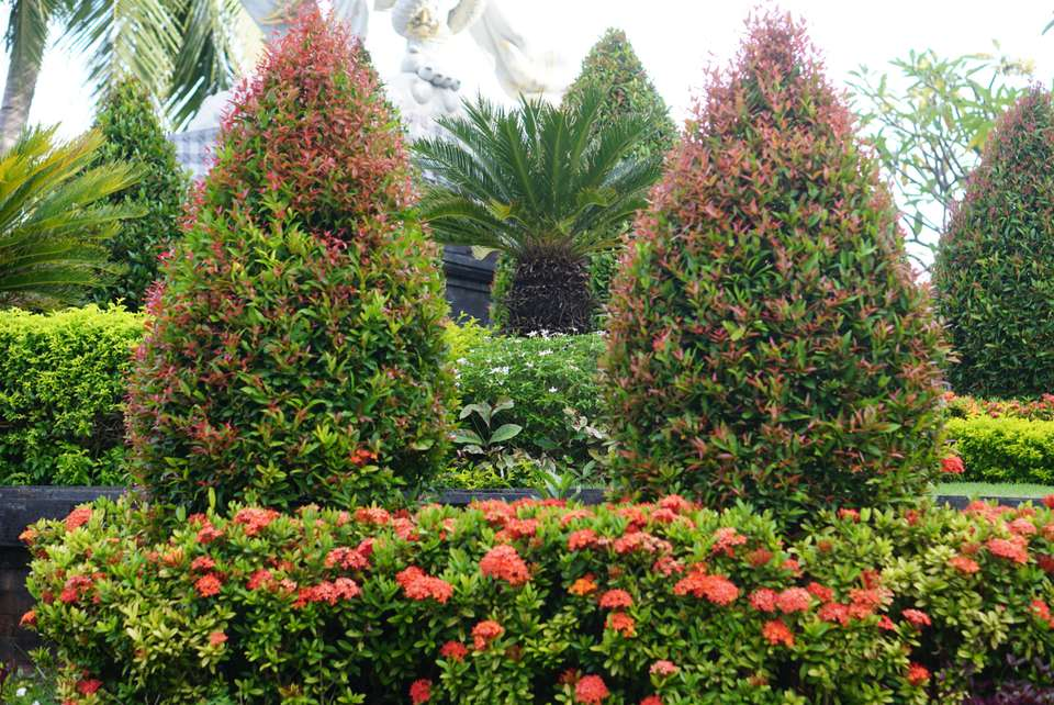 Pink flowered bushes planted under cone shaped green and pink evergreen trees