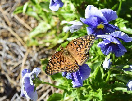 butterfly on a flower bud