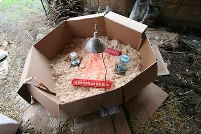 A brooder area made of cardboard boxes and duct tape.