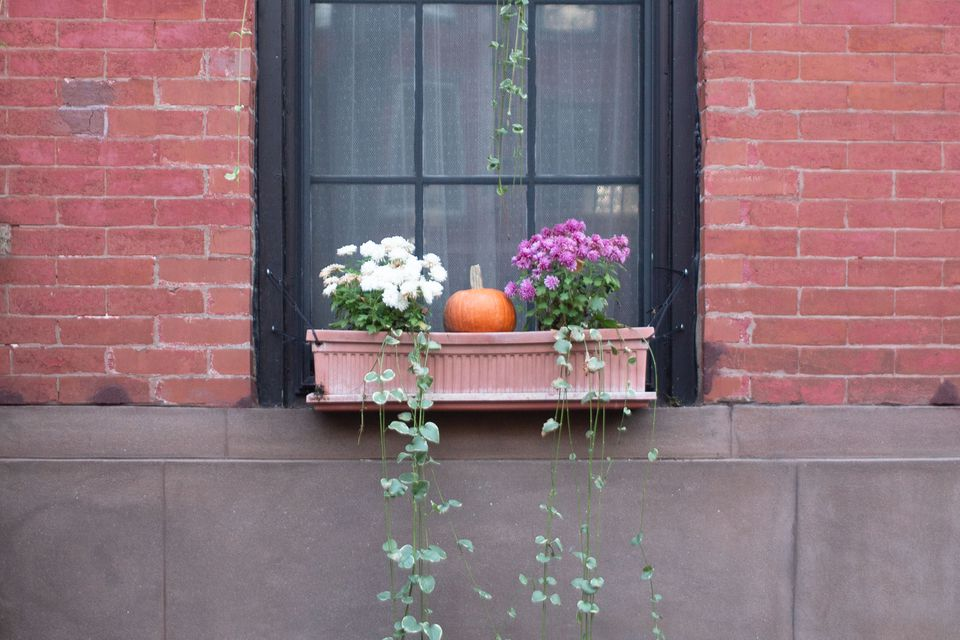 window box with a pumpkin and ivy