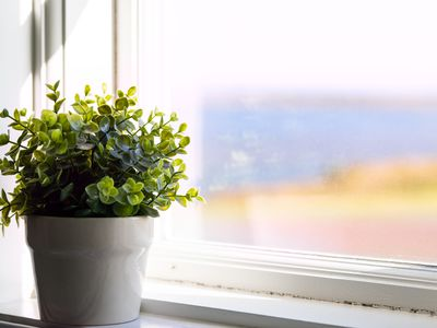 Plant in front of cloudy window