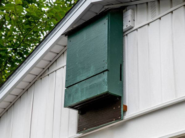 Green bat house near top point of house