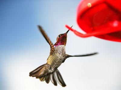 The 7 Best Hummingbird Feeders To In 2018