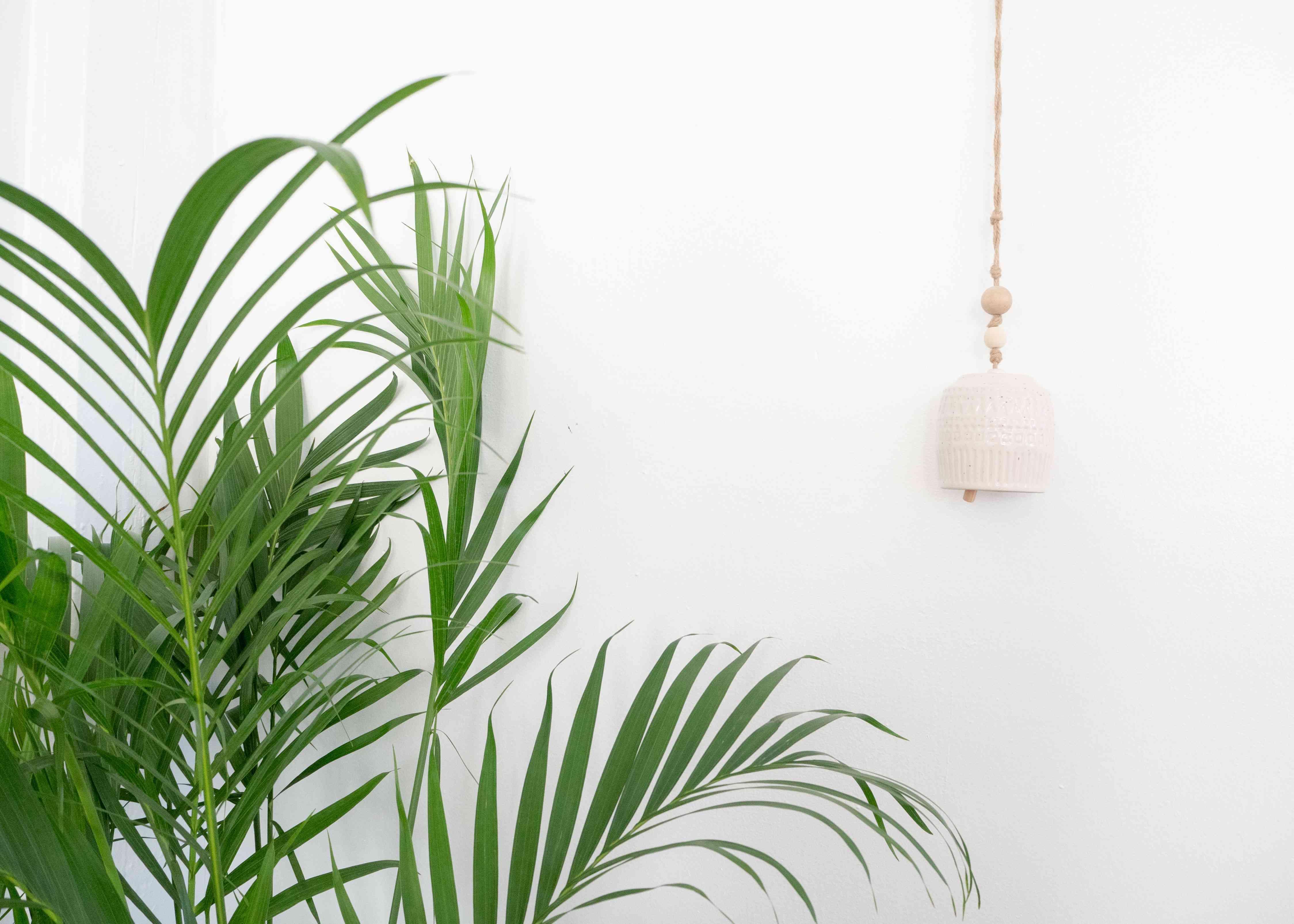 indoor palm tree leaves