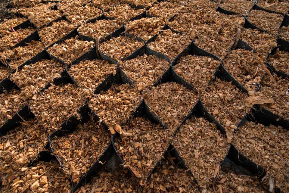 coconut coir for gardening