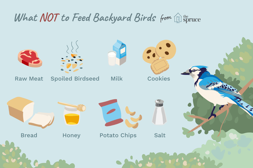 worst foods for birds