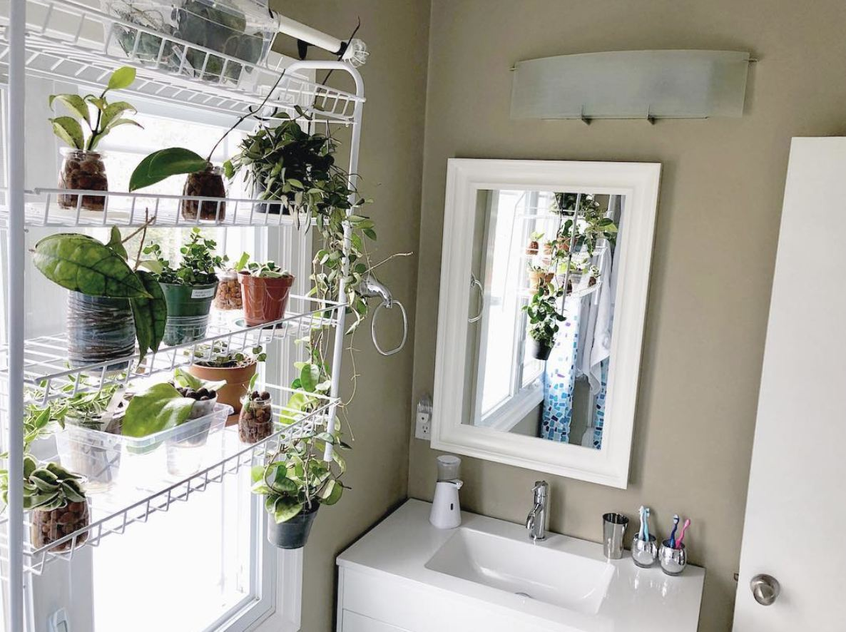20 Bathroom Plants That Were Styled Perfectly