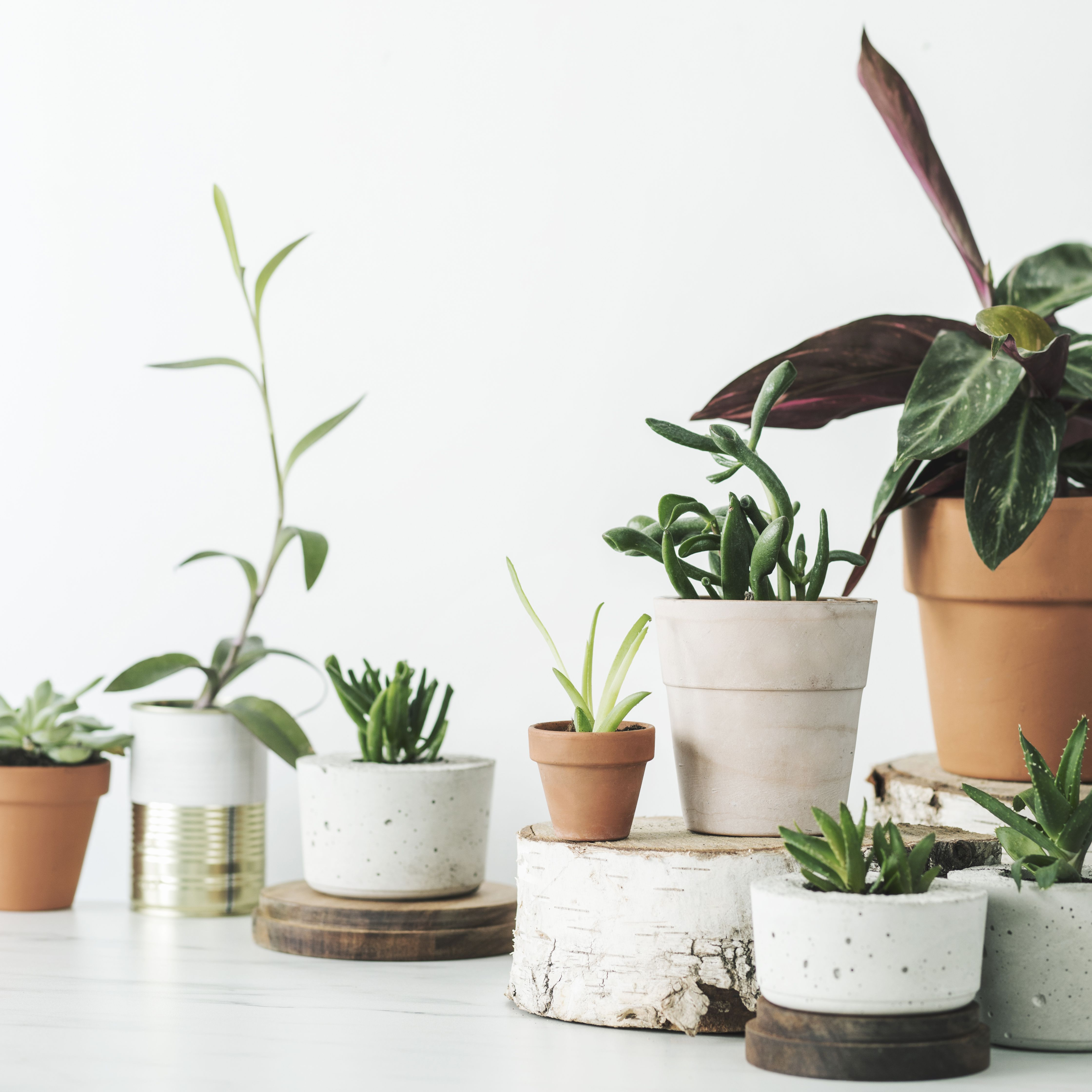The 7 Best Places To Buy Plants Online