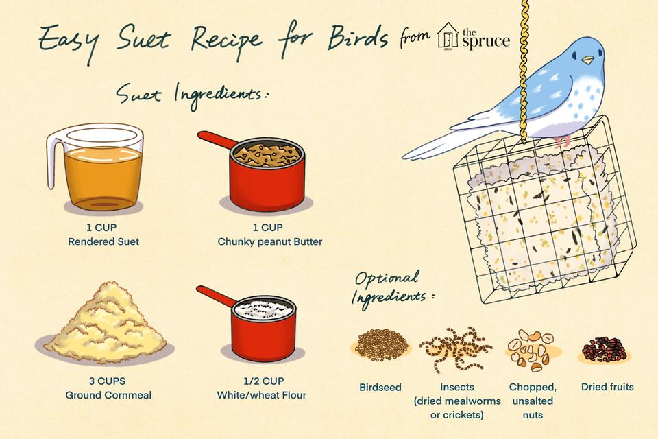 easy suet recipe for birds illustration