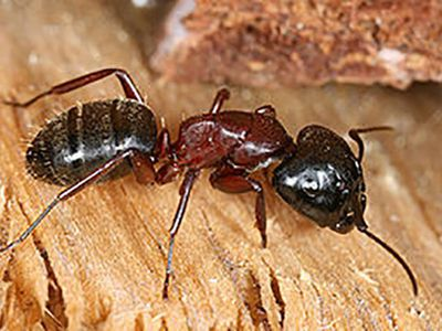 How To Tell The Difference Between Ants And Termites