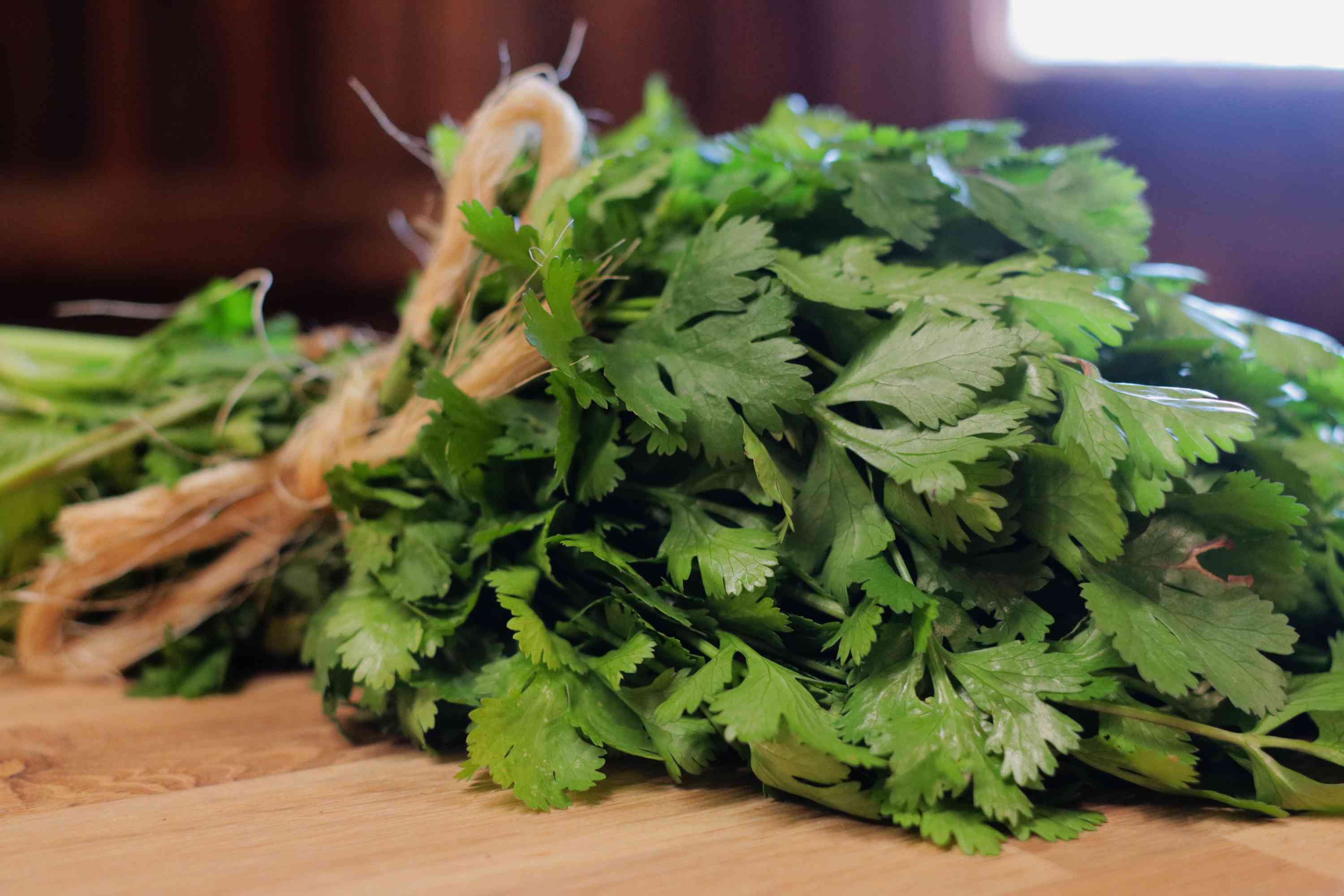bunch of harvested cilantro
