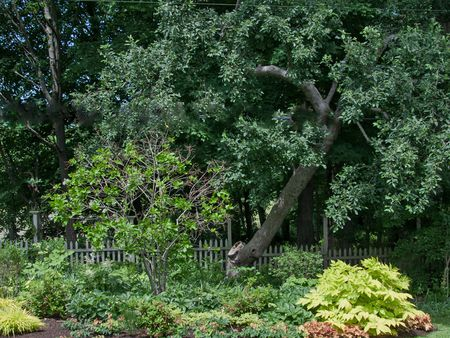 10 Tips For Planting Under Trees