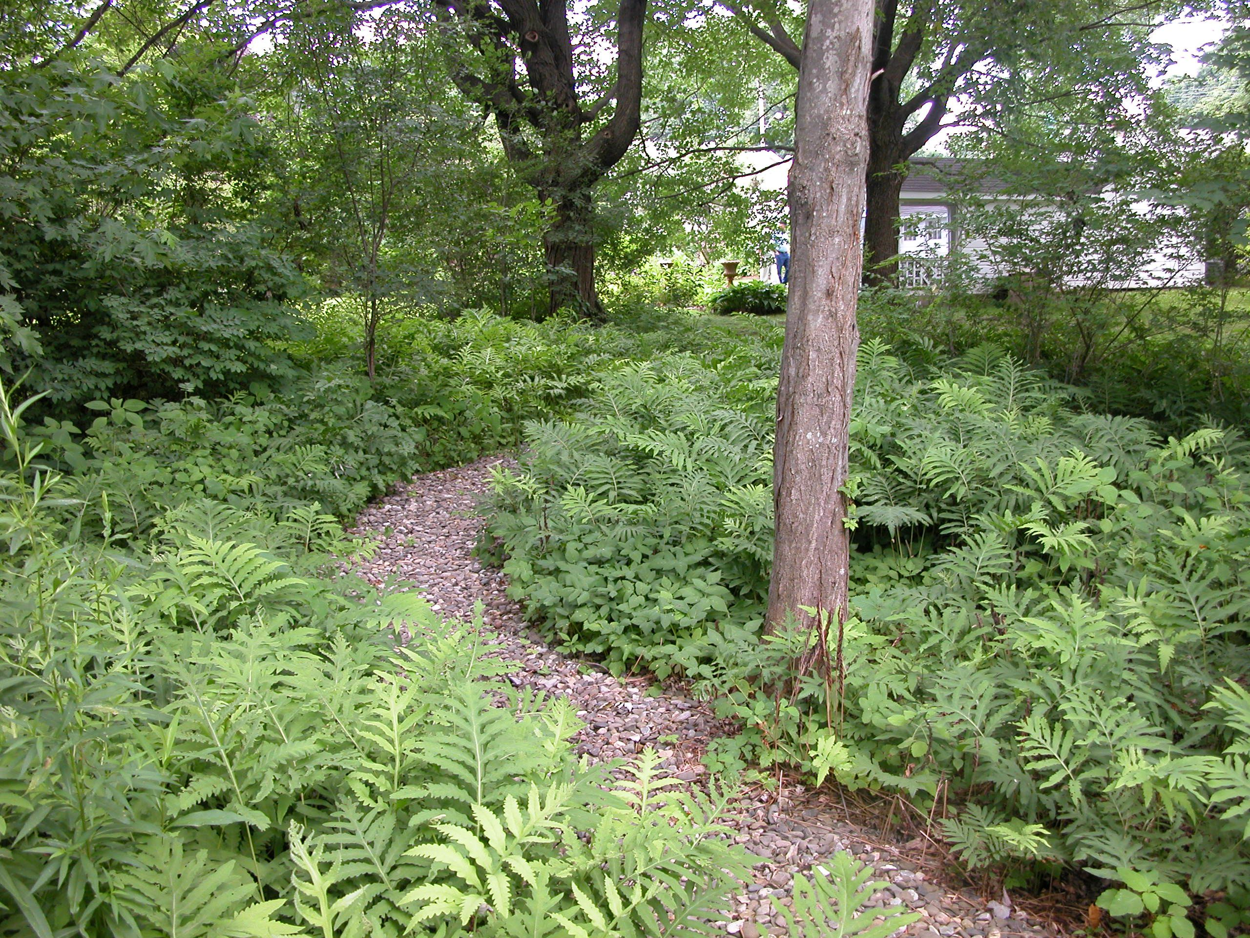 Pebbled path in a woodland garden