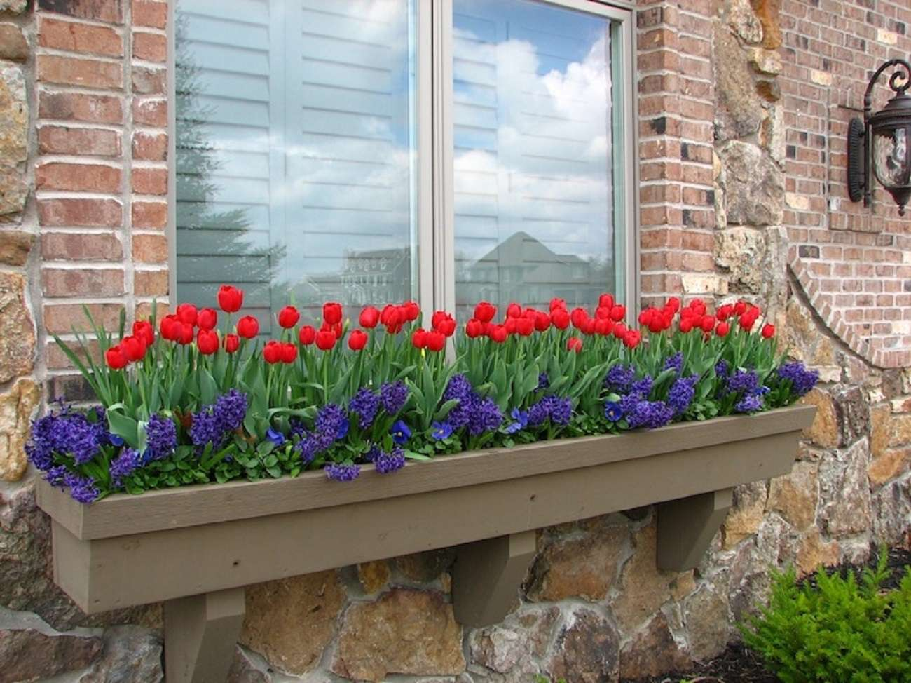 flower box idea with tulips